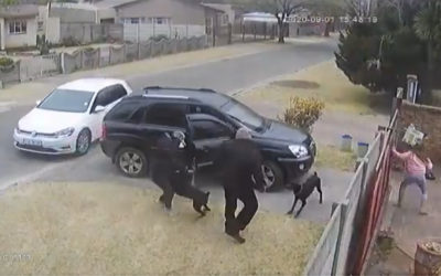 Hijacker Shoots Brave Dog in Armed Robbery.